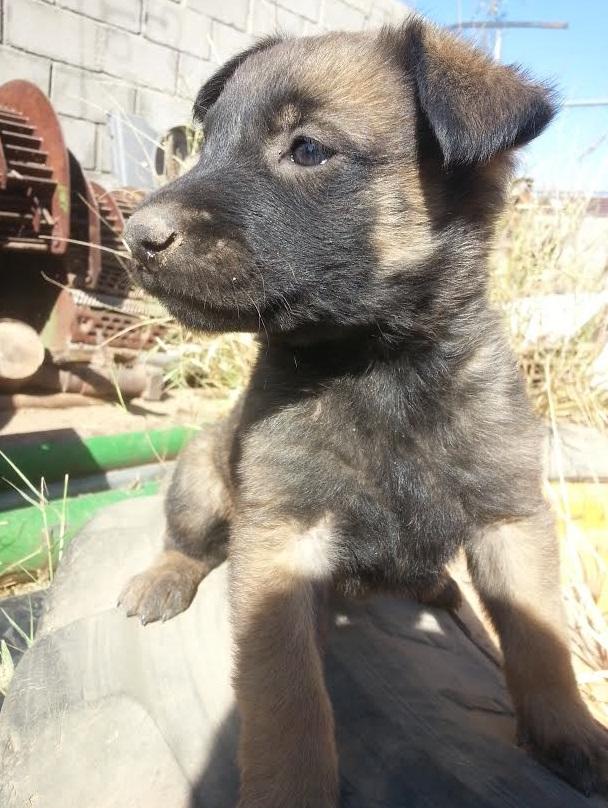 bills ridiculously cute puppy